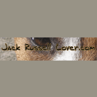 Jack Russell Lover